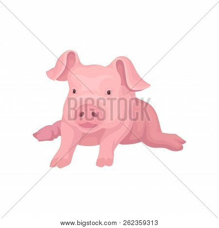 Adorable Pink Piglet Lying Isolated On White Background. Domestic Animal With Big Ears And Cute Snou
