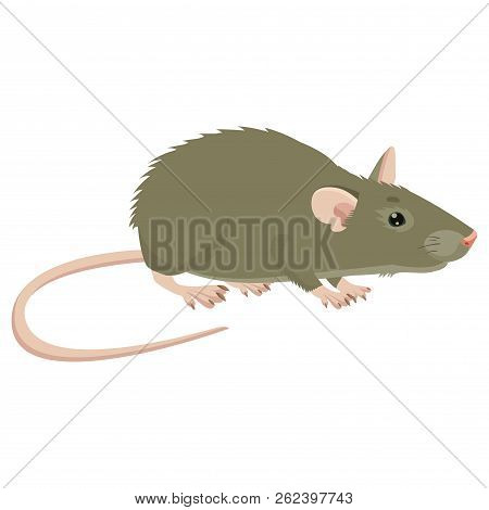 Mouse, Rat Vector Sign Illustration. Rat Isolated On White Background. Rat Vector Disease. Harmful R