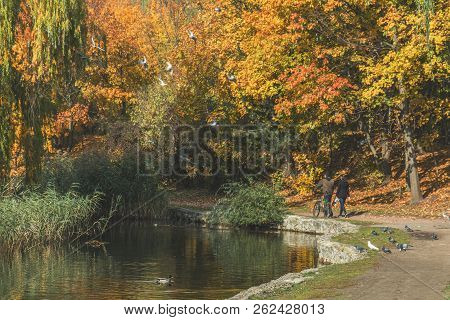 Autumn City Park. Park In The Fall. Bright Autumn Trees In The Park. Sunny Day. Toned Photo