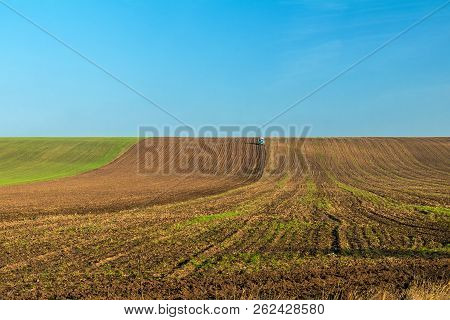 Winter Wheat Field With A Tractor Working On It In The Fall Under The Clear Blue Sky. Sunny Autumn D