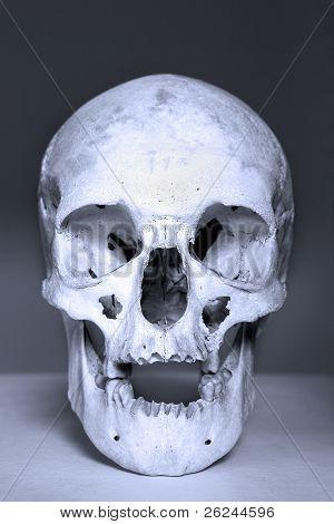 white skull in blue