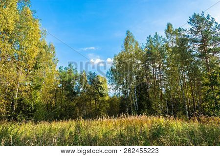 Tall Grass At The Forest Edge.
