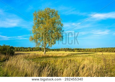 Landscape With A Lonely Birch In The Autumn Day.