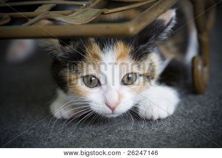 Cute kitten hiding, ready to pounce on something