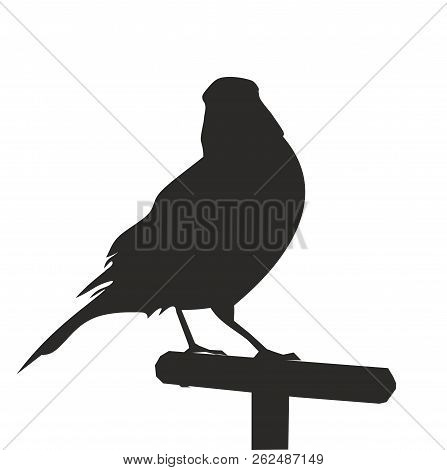 The Silhouette Of A Bird On A Perch. Vector Illustration. Silhouette Of Canary. Vector Icon