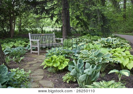 Hosta in Inniswood Gardens in Columbus, Ohio