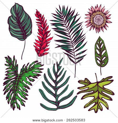 Vector Collection Of Hand Drawn Tropical Leaves