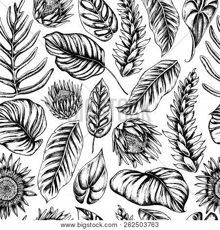 Vector Seamless Pattern Of Palm Leaves And Calathea. Hand Drawn Vector Illustration
