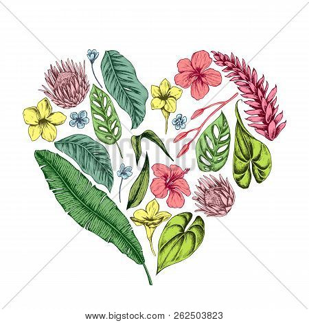 Vector Collection Of Hand Drawn Tropical Plants