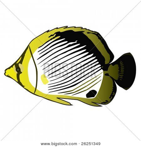Tropical fish Butterfly-Fish. Vector