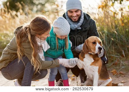 family, pets and people concept - happy mother, father and little daughter with beagle dog outdoors in autumn