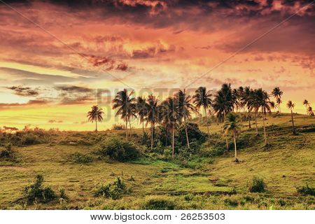 Rural landscape at sunset time. Donsol. Philippines