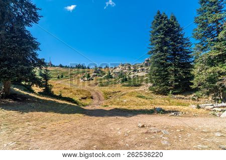 Pinetree Forest In Uludag National Park