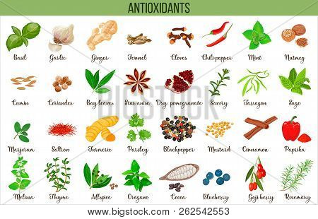 Antioxidant Food, Herbs And Spices. Healthy Lifestyle. Super Food Anthocyanins, Vector Illustration