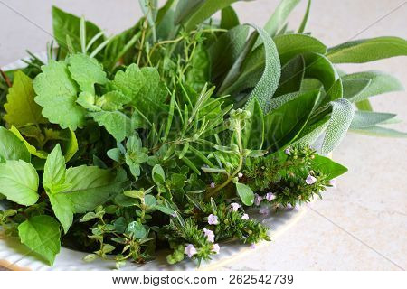 Fresh Spicy And Medicinal Herbs On White Background. Bouquet From Various Herb - Rosemary, Oregano,