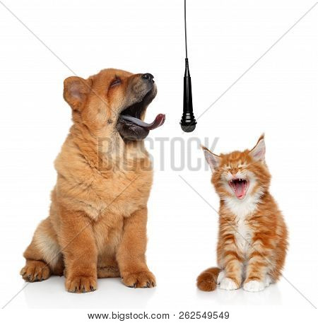 Singing Puppy And Kitten Isolated On White Background Concept