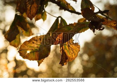 Autumn Leaves Background. Autumn Background Nature. Fall Background Vintage Photo. Yellow Leaves In