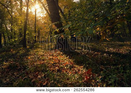 Autumn In The Park In Sunset. Sunset In City Park In Autumn. Public Park In Autumnal Colors. Fall In