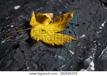 Autumn Background - Dry Autumn Leave On The Black Background. Autumn Still Life. Cozy Card, Autumn C