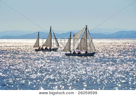 sailing boats regatta against the sunset