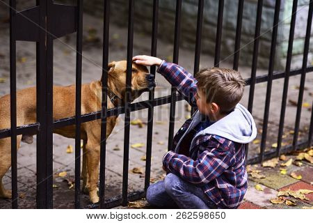Dogs Are Helpful. Small Boy Plays With Dog In Dogs Shelter. Small Boy Patting Dog On Head. A Dog In