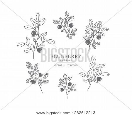 Hand Drawn Blueberry Branches Isolated On A White Background. Collection Of Botany Vector Illustrati