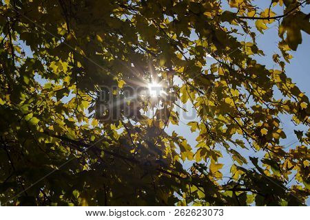 Autumn Trees. October. Sunny Day. Colorful Autumn Landscape With Sunbeams Breaking Through The Autum