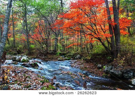mountain stream in the fall forest