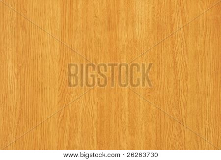 maple   tree wood textured background