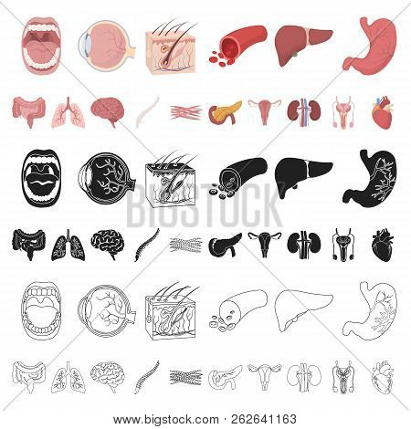 Internal Organs Of A Human Cartoon Icons In Set Collection For Design. Anatomy And Medicine Vector S