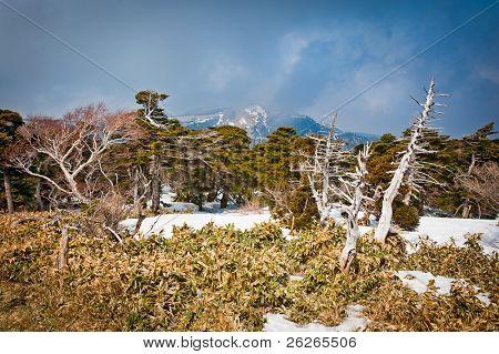 Mountain storm landscape at Hallasan of Jeju island Korea