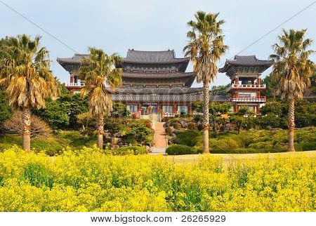 Rape flowers at famous Yakcheonsa Buddhist Temple, Jeju Island, South Korea