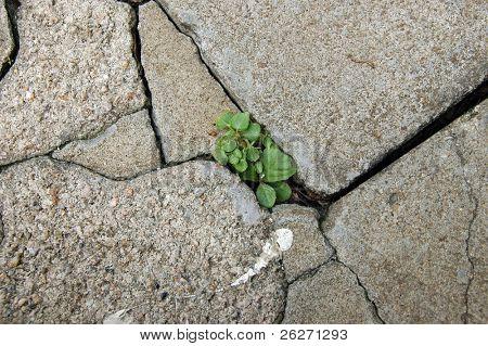 Little plant growing between the tiles