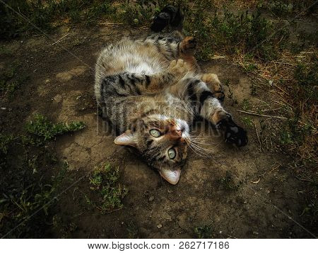 Cat. Cat Lies On The Ground. Funny Cat Closeup. Portrait Of A Cat. A Domestic Cat Lying On The Groun