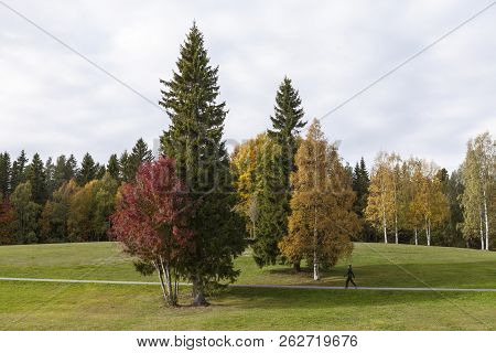 Umea, Sweden On October 04. Beautiful, Colorful Trees And Meadows In A Park During The Autumn On Oct