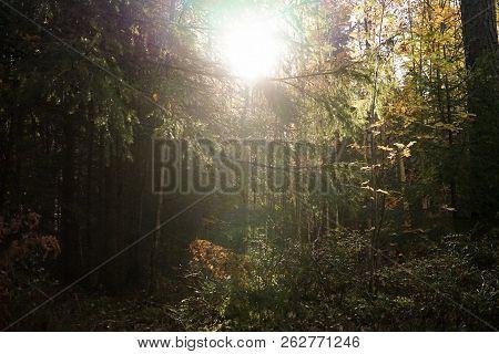 Den Förtalade Skogen I Sagovärlden Långt Bort