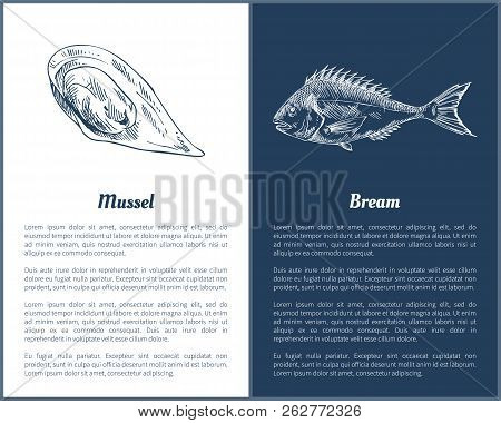 Mussel And Bream Fish Posters Set Containing Marine Delicatessen. Unprepared Seafood With Its Delici