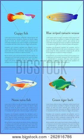 Ocean And Sea Fishes Isolated On Color Backdrops Vector Illustrations, Guppy And Neon Tetra Near Exo