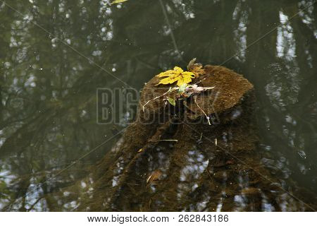 Tree Trunk In The Brook With Yellow Leaves