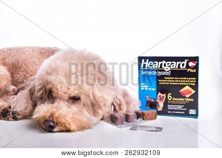 Kuala Lumpur, Malaysia, October 12, 2018: Heartgard Is Preventive Heartworms Chewables For Dogs Mark