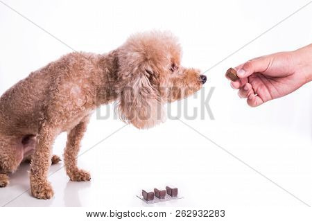 Hand Feeding Pet Dog With Chewable To Protect From Heartworm