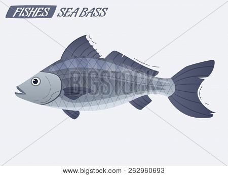 Fish Sea Bass Character. Cartoon Vector Illustration. Fishing Or Food Concept