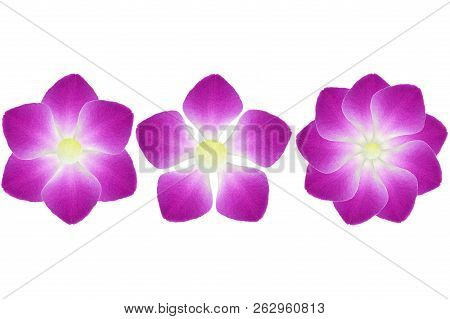 Flower Shape From Dendrobium Orchid Petal On White Background