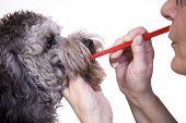 Dog dental health poster