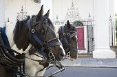 Horse drawn carriage in Charleston, south Carolina poster