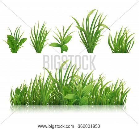 Realistic Green Grass. Spring Herbs And Bushes , 3d Vector Plants. Illustration Plantain, Dandelion