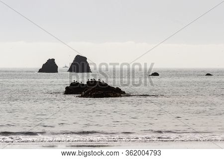 Row Of Seagulls On A Rock In Crescent City As A Fishing Charter Is Seen In Between To Large Rocks In