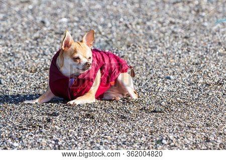 Puppy In A Puffy Coat