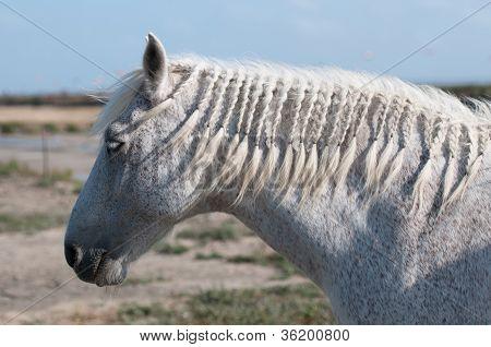 White Horse Profile And Salt Marsh