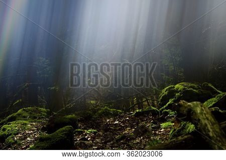 Untouched Nature. Magic And Mysterious Forest And Rays Of Light.